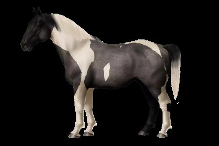MFI Dutch Warmblood ♀ • Horse World Online