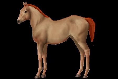 I Am A Connemara Man man o fireworks connemara stallion 7 gen coi 52 27 % wildcat connemara ...