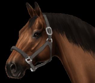 Cost Of Hanoverian Horse