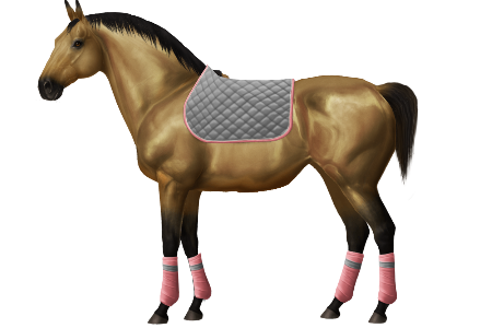 Little_Cookie's Training Forum [ Closed ] • Horse World Online