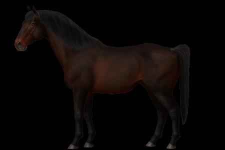 Cape Horse