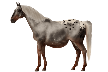 Oldest Living Horse Contest Horse World Online