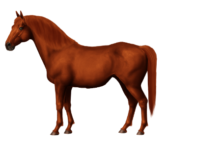 Canadian Warmblood