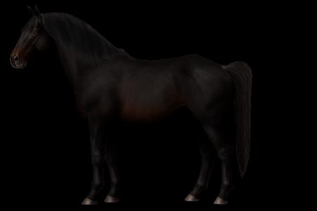 Calvinia Horse