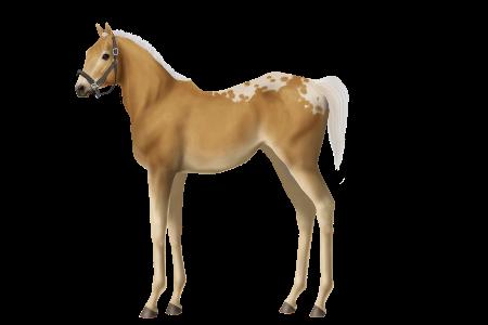 Unnamed Horse #427800 • Horse World ...