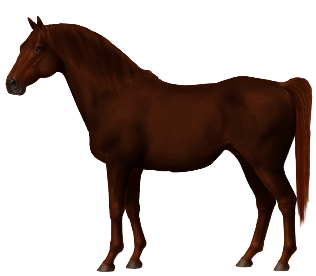 Horse World Online - Unnamed Horse #109873