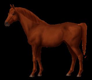 Persian Arabian