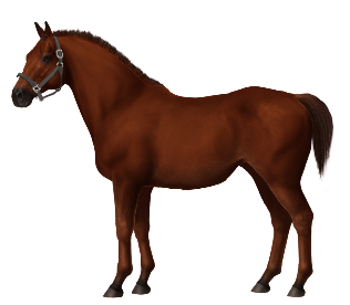 Unnamed Horse #310982 • Horse World ...