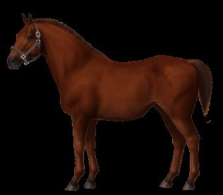 Unnamed Horse #310982 • Horse World ...