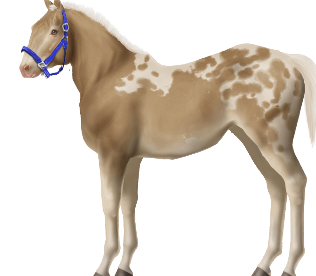 Unnamed Horse #327965 • Horse World ...