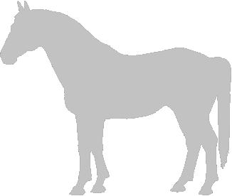 Anadolu Pony